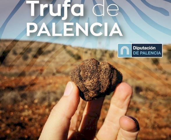 La Diputación de Palencia invierte 15.000€ en la investigación y la difusión de la riqueza micológica