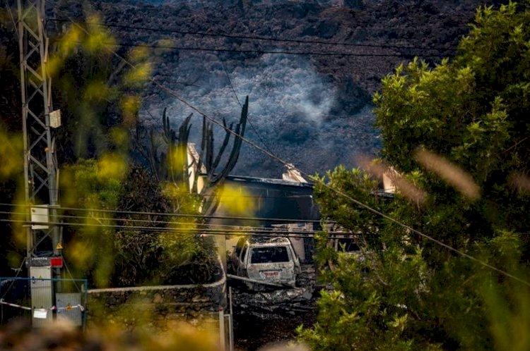 La erupción ha arrasado la vegetación de La Palma, pero resurgirá de suscenizas